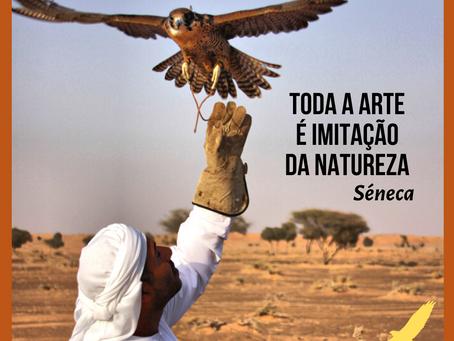 A Arte da Falcoaria 🦅