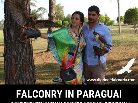 Falconry in Paraguay