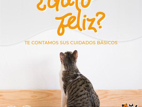 ¿Gato feliz? Te contamos sus cuidados básicos