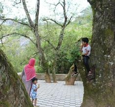 On the tree.jpg