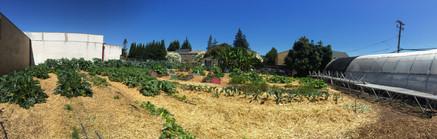 firehouse farm 2.jpg