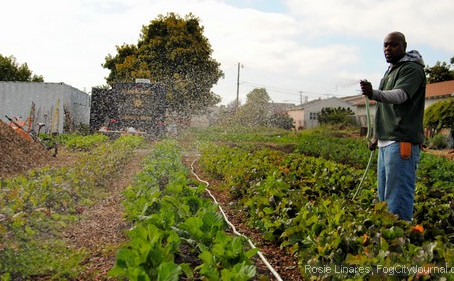 East Bay Urban Farms Sprout Healthy Food Choices