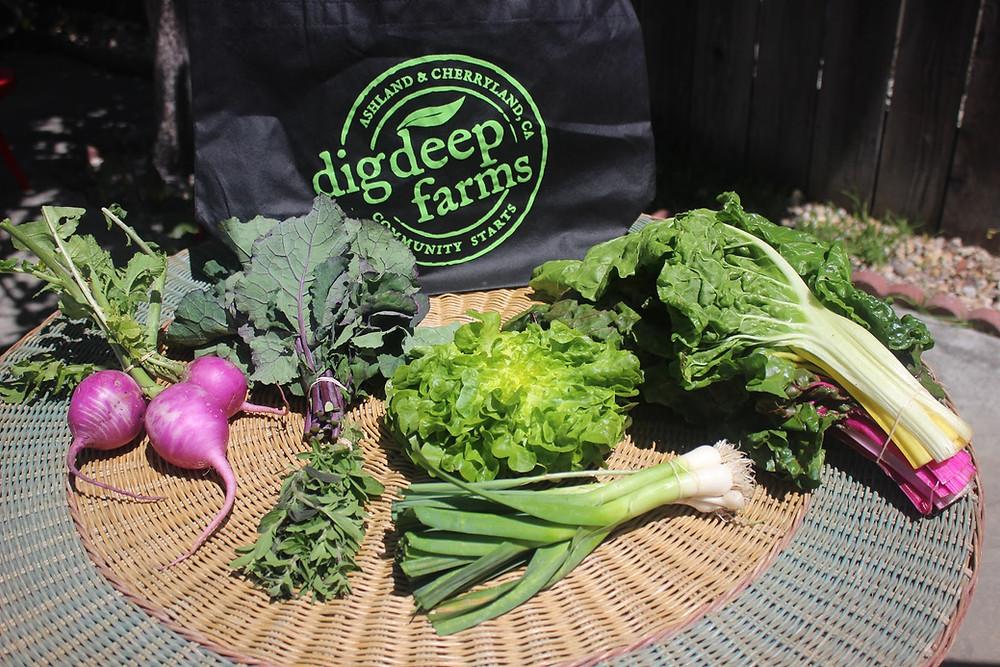 Fresh veggies from Dig Deep Farms
