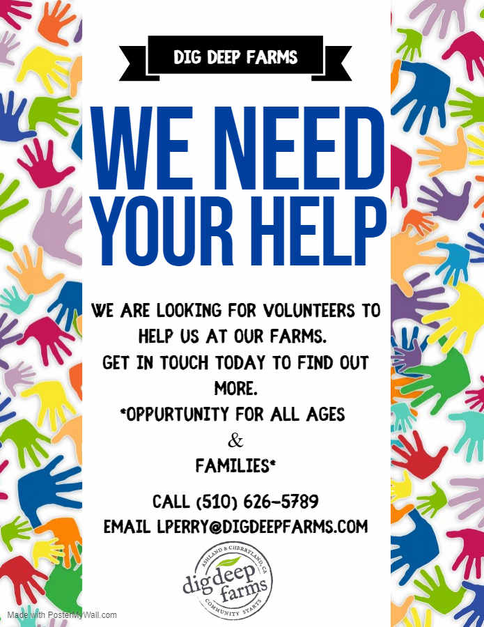 DDF Volunteer Flyer