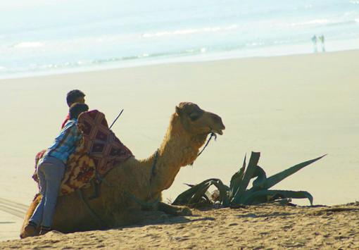 kamel.jpg