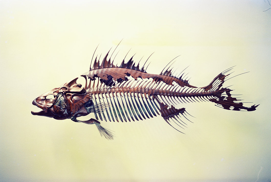 Wall-mount, walnut and bronze fish skeleton sculpture.