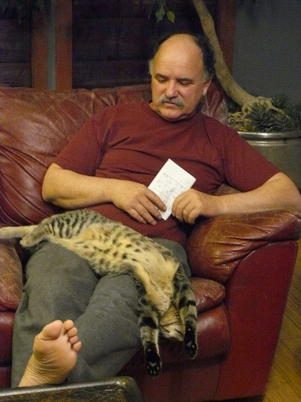 man sitting on couch with feet up and sleeping cat draped liberally over/off of thighs