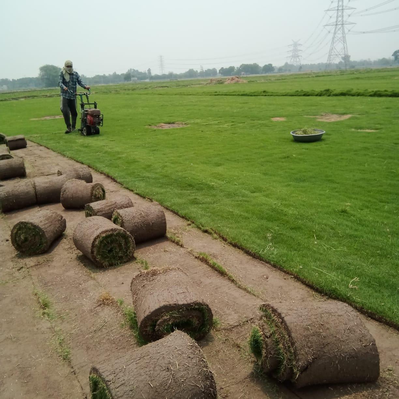 Doob Grass