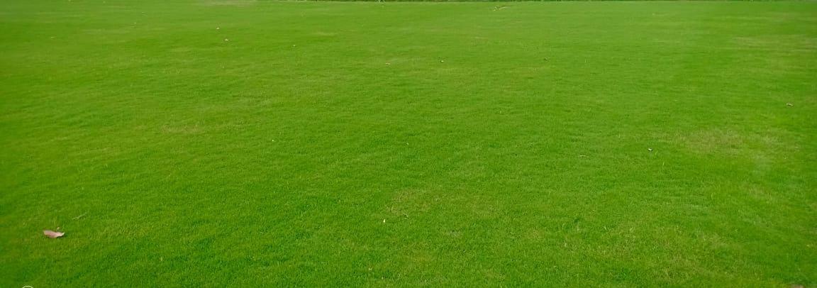 Selection No. 1 grass