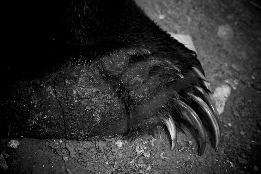 Grizzlypaw