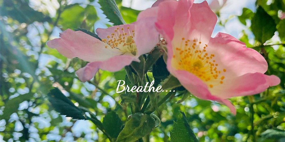 PAST EVENT 'Breathe & Relax' with Michelle Helstrip