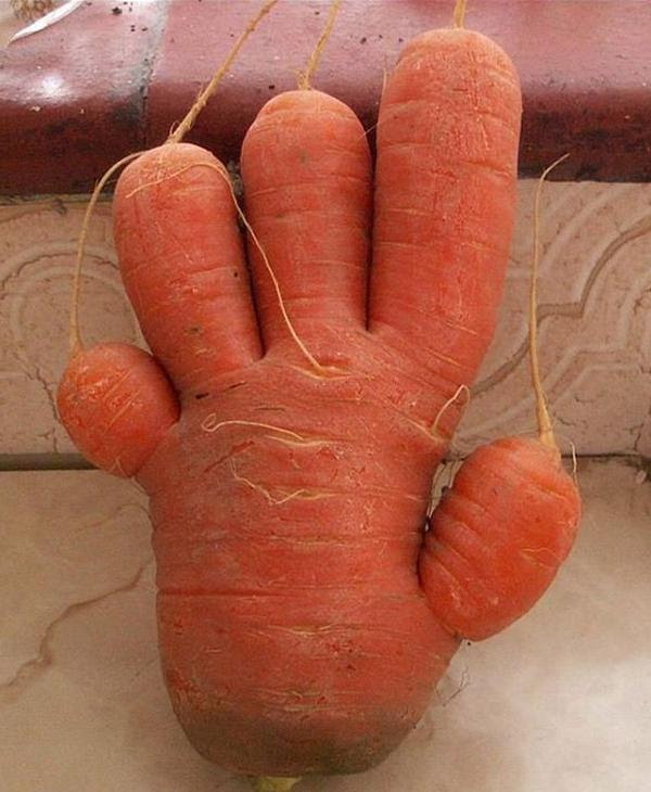 "A very ""handy"" carrot!"