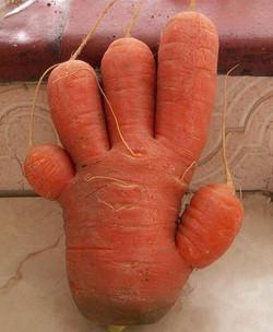 "A very ""handy"" carrot!"