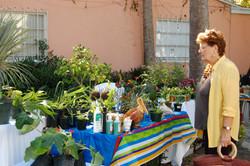 Guest views plants for sale
