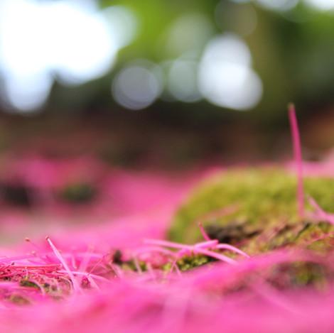 Pink/Dream