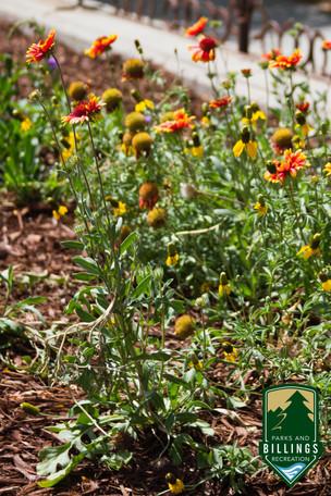 Billings Planter_4.jpg