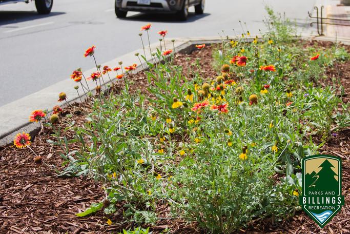 Billings Planter_2.jpg