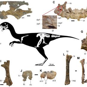 Gobiraptor minutus: New Dinosaur Species Discovered in Mongolia