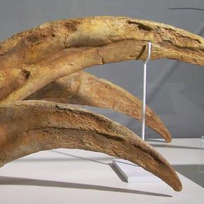 Therizinosaurus AKA the Claw!