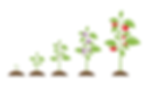 Goal of planting.png