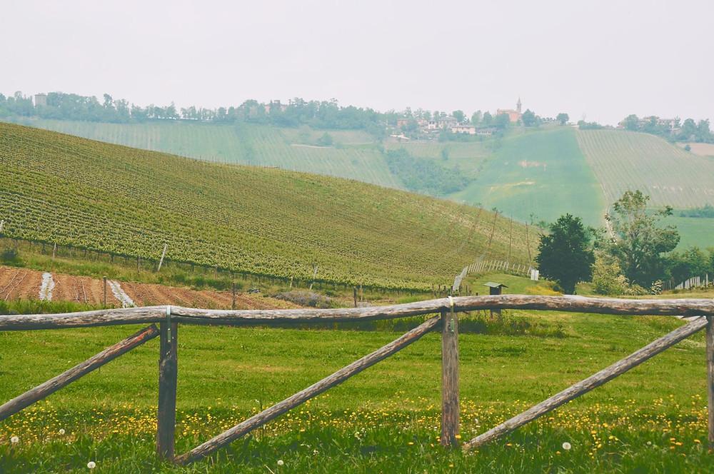image of green fields