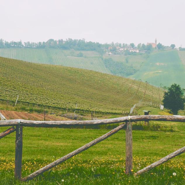 Изменение вида разрешённого использования земельных участков сельскохозназначения с «для ведения личного подсобного хозяйства» на «для ведения садоводства» - «Смоленское Поозерье»