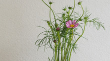 残りの花材でもう一品。78