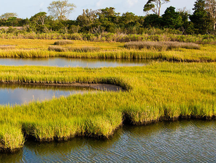 What I Learned at Chincoteague