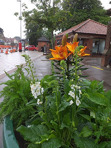 Attleborough. Best Large Container Plant