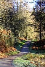 Woodland Walk, Tarn Hows.JPG