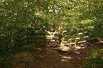 Dappled light Roddlesworth Woods.JPG