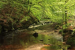 A river runs through it, Roddlesworth.JP