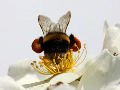 Busy bees always make honey