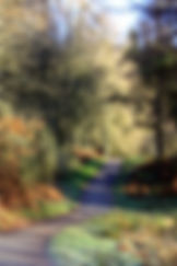 Path through Autumnal woods.JPG