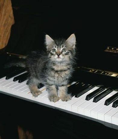 kitten on piano.jpg