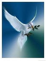 peace_dove.jpeg