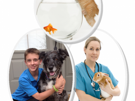 Pets need Specialized medicine too