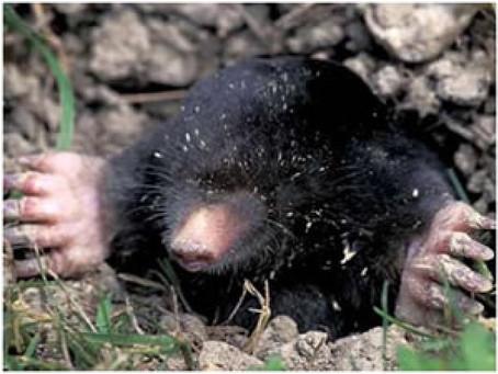 Moles! Moles! and Mo Moles!!