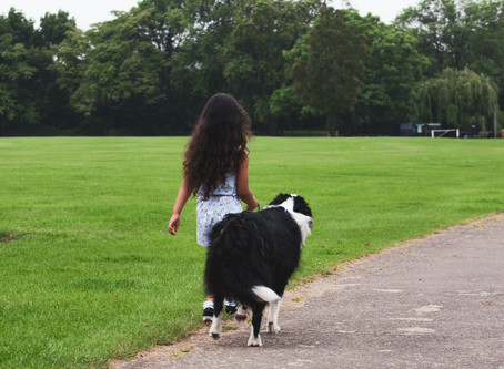 Pacing gait in dogs, what does it mean?