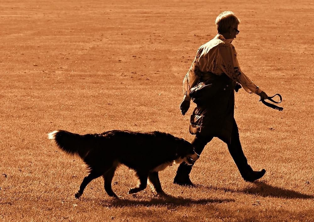 dog pacing