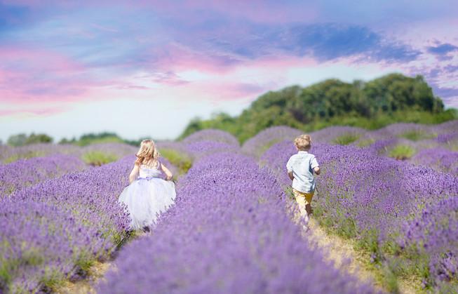 sunset, purple sky, lavender farm