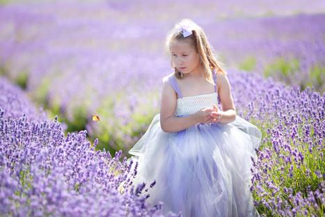 butterfly lavender farm