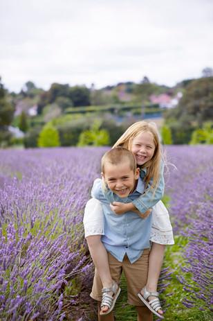 piggy back, lavender farm
