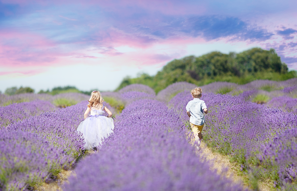 Dreamy Lavender Field, Family portraits