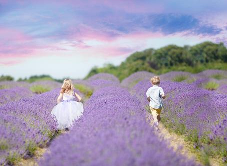 Mayfield Lavender Farm, Family Portraiture