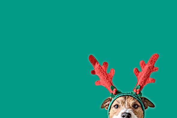 New year and Christmas concept with Dog