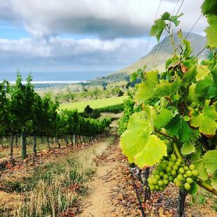 Cape Wine Tour