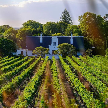 Constantia wine tour
