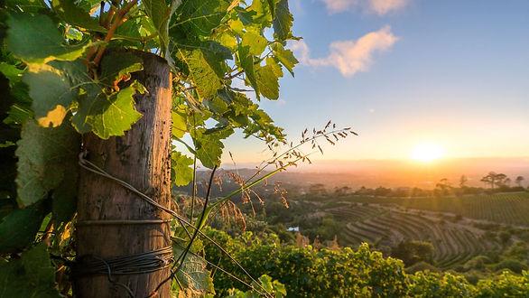 Constantia-wine-tour-7.jpg