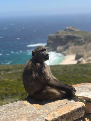 Cape Point Natures Reserve Ba
